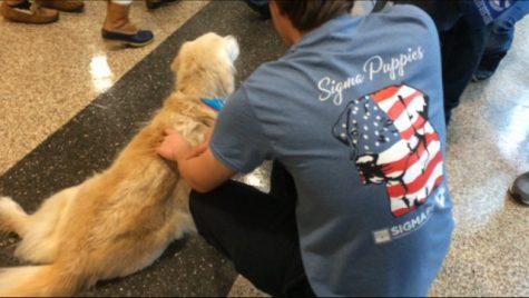 Sigma Pi brings puppies to Marillac