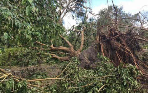 Tree uprooted in a backyard in Florida as a result of 100 mph winds.