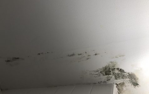 Mold Prompts Student Concerns, Complaints