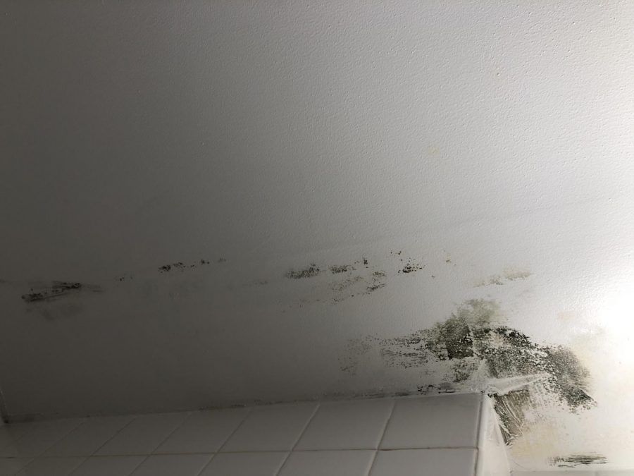 Colleen Greaney said the she does not anticipate more mold since summer is over.