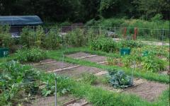 SJU's Thriving Organic Garden