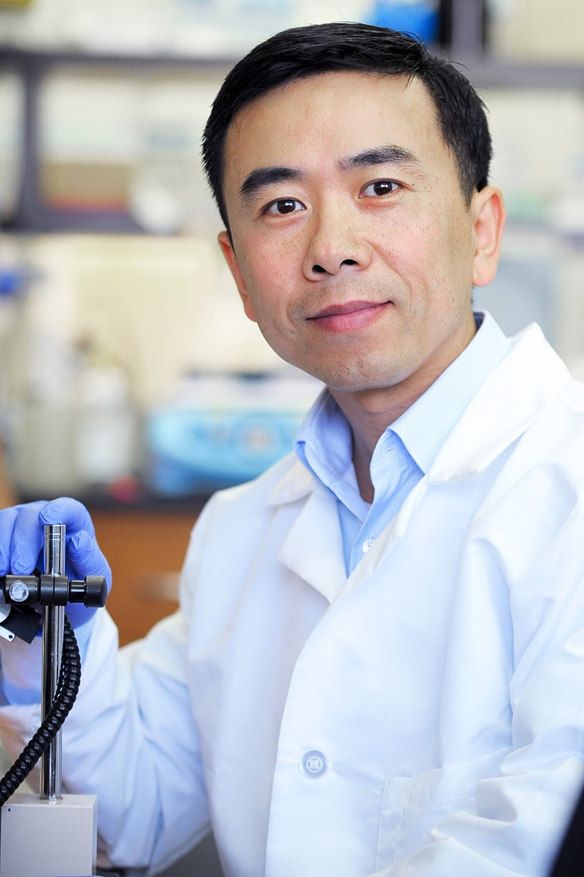 Professor Yong Yu, Ph.D., was recently awarded a $1.33 million NIH grant for Kidney Disease Research. PHOTO COURTESY / YONG YU, Ph.D.